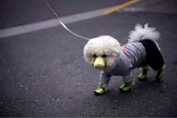 Cão usa máscara de proteção, em Xangai, China