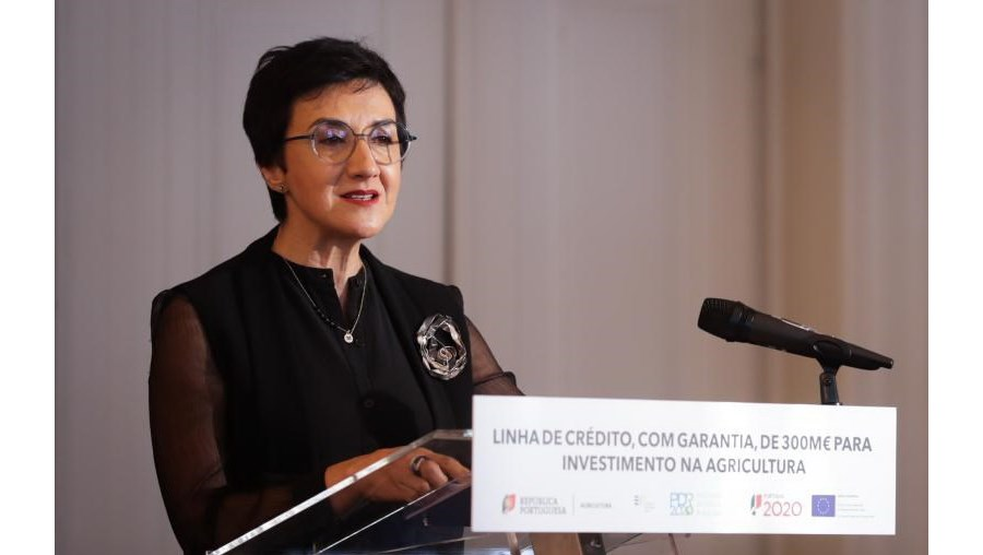 Maria do Céu Albuquerque
