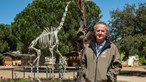 Badoca Safari Park corre o risco de encerrar devido à pandemia de Covid-19