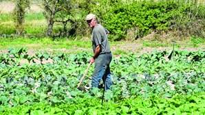 Corte de produção ameaça subir preços de legumes e frutas