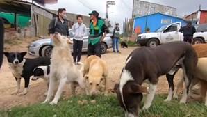 Voluntários lutam para cuidar de animais abandonados durante pandemia
