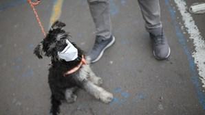 Segredo do coronavírus está no faro: cães conseguem detetar a Covid-19