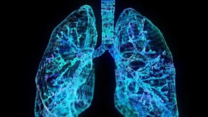 Cientista português quer perceber como células comunicam no pulmão para novos tratamentos de doenças virais