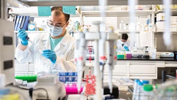Especialistas estudam relação entre severidade da Covid-19 e microbiota intestinal