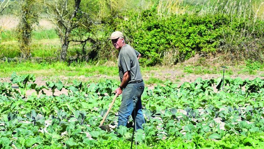 Produtores de legumes, frutas e flores