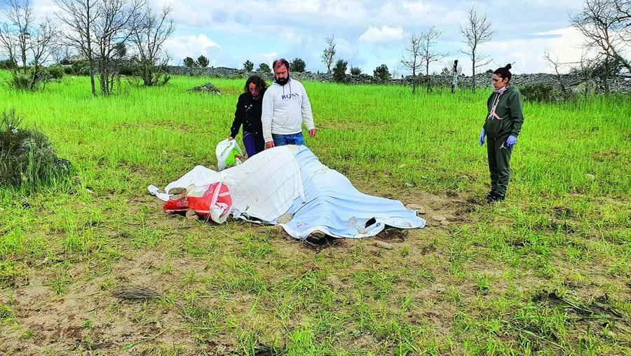 Abutres assassinos alarmam produtores de gado bovino