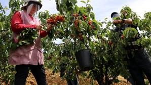 Fundão pede apoio depois de trovoada arruinar ano agrícola na região