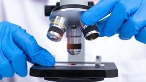 Cientista portuguesa descobre nova espécie de fungo para a ciência através do Twitter
