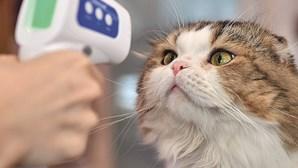 Gato infetado por coronavírus está assintomático