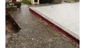 Granizo em Armamar causa prejuízos de 3 milhões de euros nos pomares
