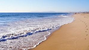 Praia Formosa em Torres Vedras interditada devido a baleia morta