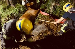 Bombeiros salvam cavalo em Espinho