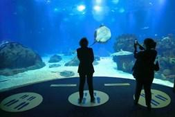 Visitantes procuram calma e paz no Oceanário de Lisboa que coronavírus 'lhes tirou'