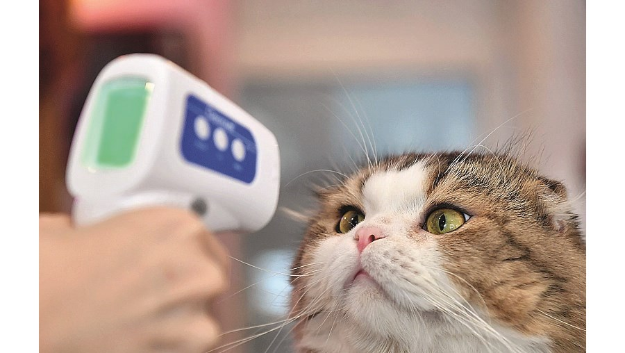 Gato com coronavírus