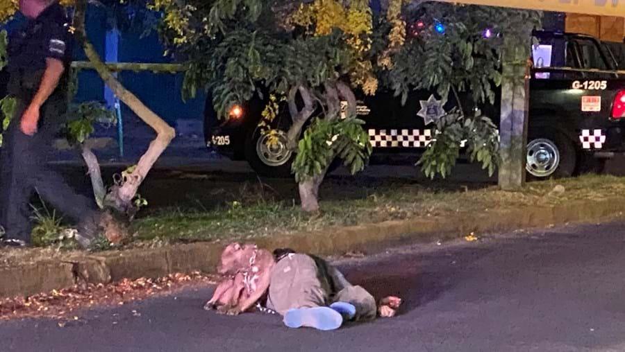 Pit Bull recusa-se a abandonar corpo de dono assassinado
