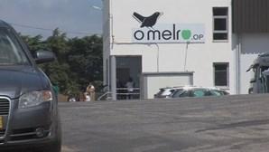 11 trabalhadores infetados com coronavírus e 293 a serem testados em central fruteira do Bombarral