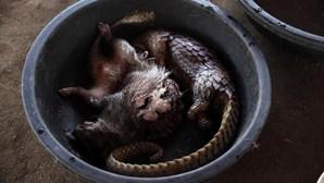 Vendem carne de animais selvagens em mercados a céu aberto e as imagens são de arrepiar