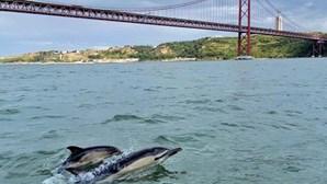 Observar golfinhos no habitat natural