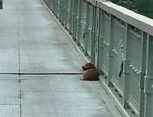 Cão recusa sair do local onde o dono cometeu suicídio