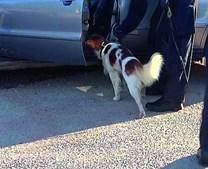 GNR usou cães para revistar 19 viaturas dos suspeitos