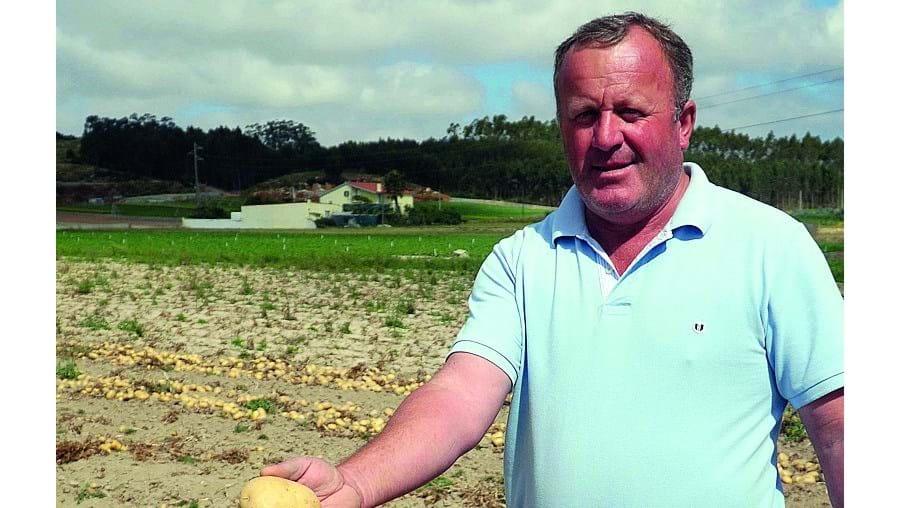 Joaquim Maria já iniciou a colheita da batata e queixa-se do preço praticado