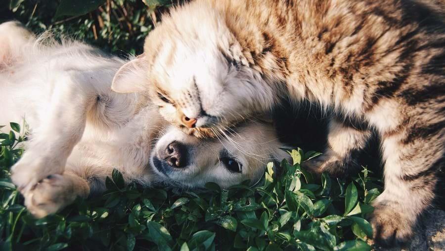 Cães e gatos, animais de estimação