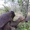 Conheça Diego, a tartaruga gigante que teve 800 filhos