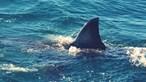 Ataque de tubarão fere homem com gravidade no estado de Pernambuco no Brasil