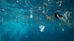 Proteção do oceano permite salvaguardar clima, pesca e biodiversidade
