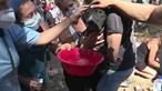Processo-crime de animais mortos há um ano em incêndio em Santo Tirso está 'parado'