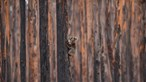 Três mil milhões de animais mortos na Austrália devido aos fogos