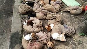 Consumo de carne de cão proibida em estado da Índia