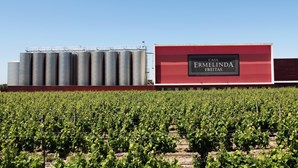 100 anos de vinhas e bom vinho