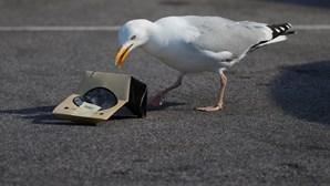 Homem morde gaivota após animal lhe roubar a comida