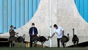 Jair Bolsonaro 'atacado' por ema no Palácio da Alvorada em Brasília