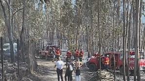 Terrenos à volta do abrigo onde morreram 54 animais em Santo Tirso não estavam limpos