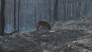 """GNR explica que salvou os animais """"que foi possível salvar"""" do incêndio em canil de Santo Tirso"""