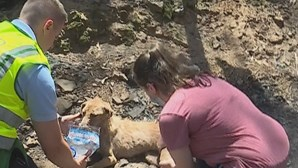 Câmara de Santo Tirso confirma 54 animais mortos no fogo que deflagrou em abrigo. Saiba quantos foram resgatados