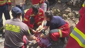 Dezenas de animais morrem em canil consumido pelas chamas em Santo Tirso