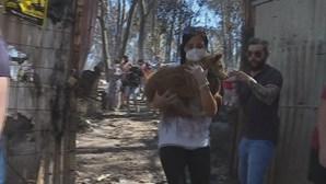 """PAN apresenta queixa ao MP por """"crimes contra animais"""" e pede explicações ao MAI"""