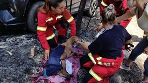 Detido suspeito de atear fogo que vitimou dezenas de animais em canil de Santo Tirso
