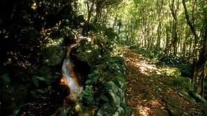 Estudo revela aumento de espécies exóticas de insetos nas florestas nativas dos Açores