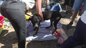 Fogo em canil de Santo Tirso 'demite' chefe veterinário