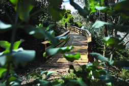 Passadiços de Castelo de Paiva
