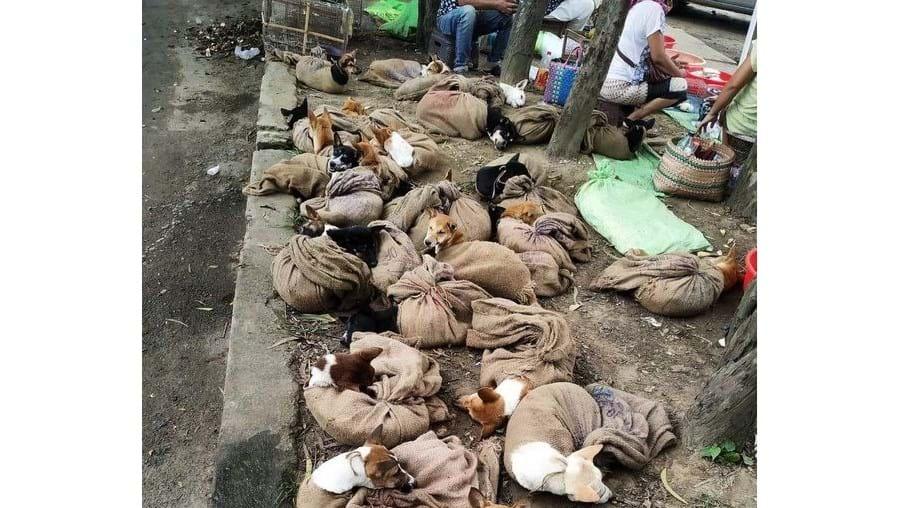 Animais mal tratados em Nagaland, Índia