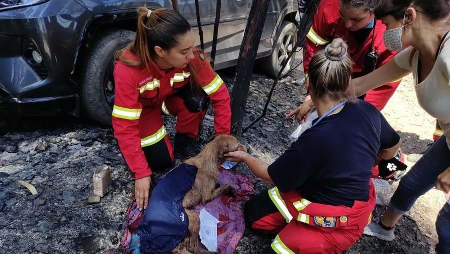 Animais morrem em incêndio em canil de Santo Tirso
