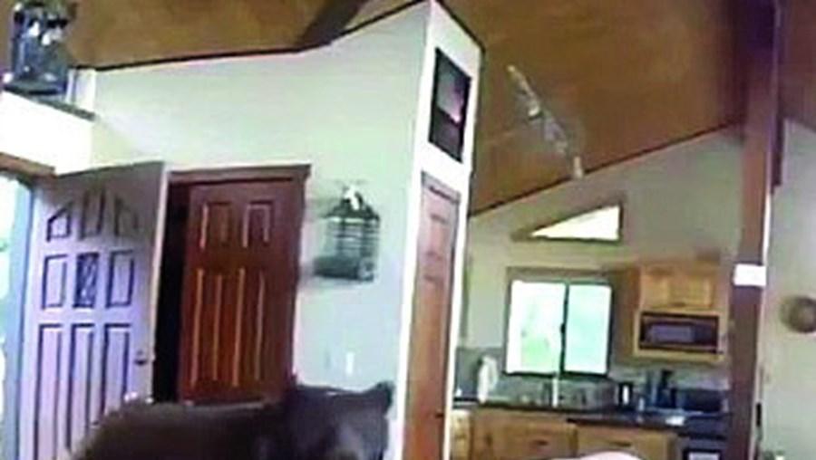 Urso arromba porta de casa e dirige-se à sala de estar