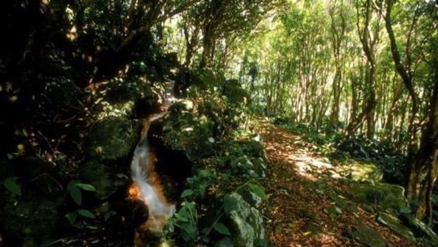 Floresta nos Açores