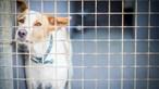 Animais sozinhos em casa mais de 12 horas? Atenção, pode dar multa de 3 mil euros