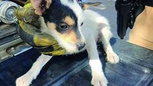 GNR salva quatro cães bebés em Loulé
